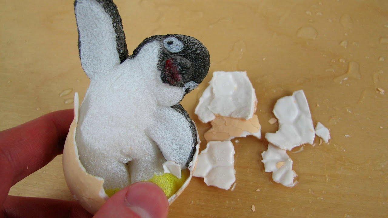 Growing pets penguin egg duck egg youtube - Gardening for pets ...