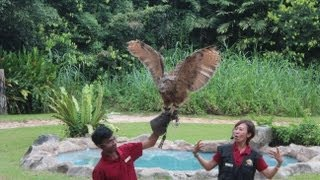 Jurong Bird Park Singapore HD - TheSmartLocal.com Singapore Attractions Episode 5