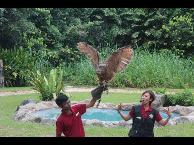 Jurong Bird Park Singapore HD - TheSmartLocal.com Singapore Attractions Episode 5