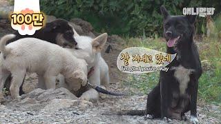 차마 떠날 수가 없었습니다 ㅣ Dog Drops Her Puppies Off At Stranger's House