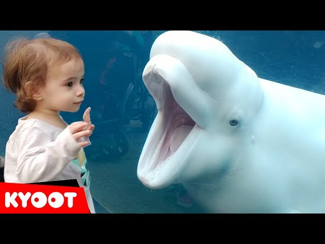Funny Kids at the Aquarium | Girl SPOOKED By A Beluga Whale!