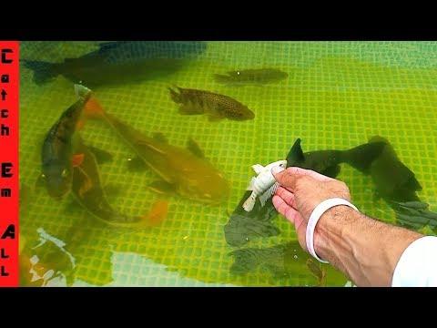 FISH TANK BREAKING Giant FISH FEEDING! thumbnail