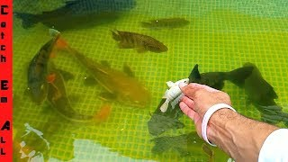 FISH TANK BREAKING Giant FISH FEEDING!