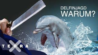 Brutale Tradition – Delfinjagd in Japan   Dirk Steffens