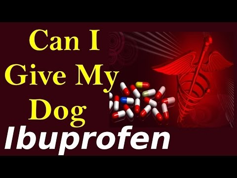 Can Give My Dog Ibuprofen