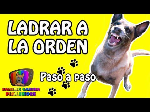 ENSEÑAR El LADRIDO A LA ORDEN   Adiestramiento Para Perros
