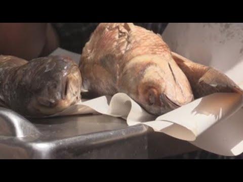 Pescado seco y pestilente: el manjar con el que Egipto recibe la primavera