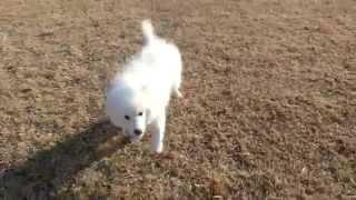 撮影日2015年2月10日 アライ畜犬牧場 http://www.araichikuken.com.
