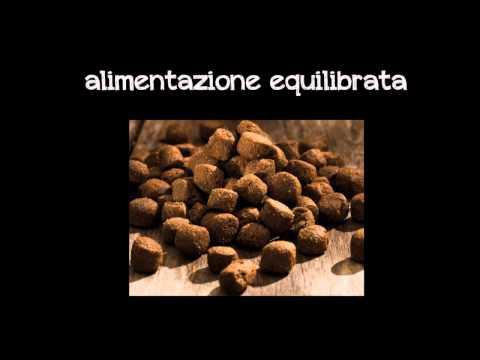 Allenamento Pit Bull 4-24 mesi.wmv from YouTube · Duration:  8 minutes 59 seconds