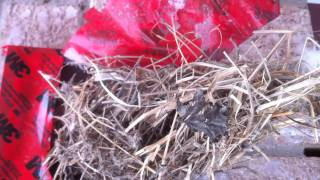 Birds Nest Removal from Dryer Vent