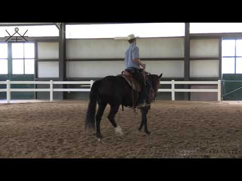How to maximize your communication in the Two Rein | Developing the Bridle Horse Series