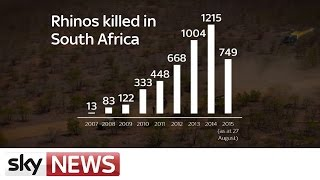 Rhino Wars: Facts And Figures