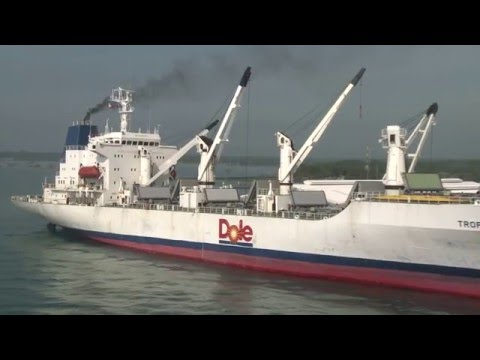Dole Banana Farm To Port Journey - from the Philippines to New Zealand & Asia