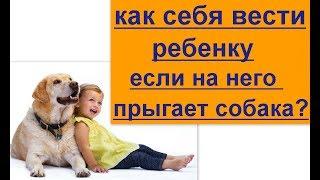 как вести себя ребенку если на него прыгает собака