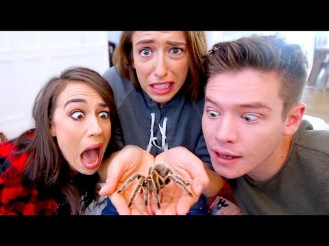 FACING OUR BIGGEST FEARS! SPIDERS AND SNAKES! 😵