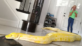 Giant Snake Loose in Our House!!!