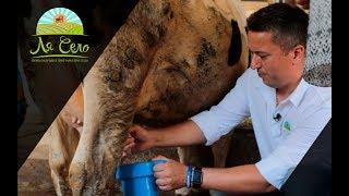 'Ля Село' на коров'ячій фермі 'Мукко', випуск ІІ