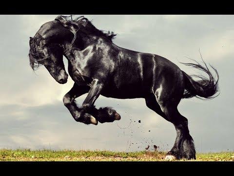 Tengger Cavalry - Galloping Steeds (Audio)