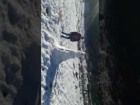 Kardan adam goren tarsuslu