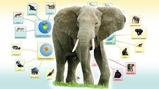 Дикие животные для детей часть 1 - млекопитающие - Развивающее видео для детей