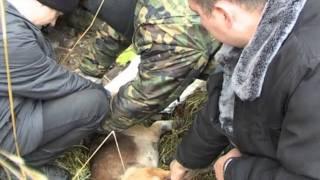 Служба Спасения Освобождение собаки от проволоки(Служба спасения Освобождение собаки от проволоки http://spb9579595.ru/, 2011-12-02T15:09:46.000Z)