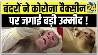 बंदरों ने Corona Vaccine पर जगाई बड़ी उम्मीद ! || News24