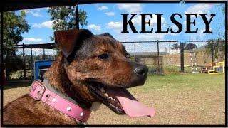 Kelsey - Adopt In Brisbane