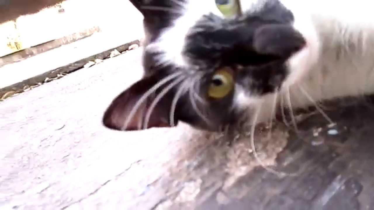my cat hisses at me