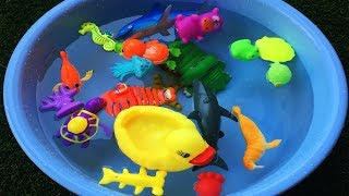 Learn Sea Animals Names and Colors Wild Zoo Animals Names Education video Animal Toys for Kids