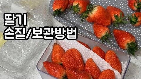 딸기 손질, 보관방법/ 딸기 오래 맛있게 먹는방법🍓