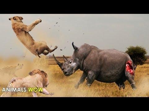 حيوانات مفترسة 2016 وثائقي صراع بين وحوش الغابة من الاقوى Youtube