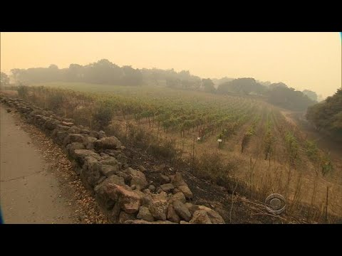 Northern California wildfires endangering region's most famous export: Wine