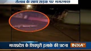 Madhya Pradesh: 10-feet crocodile show on the road in Shivpuri. Wat...