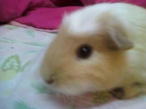 Worlds cutest piglet - photo#26