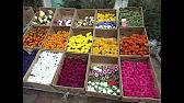 Купить луковицы тюльпанов оптом и в розницу с доставкой по россии.