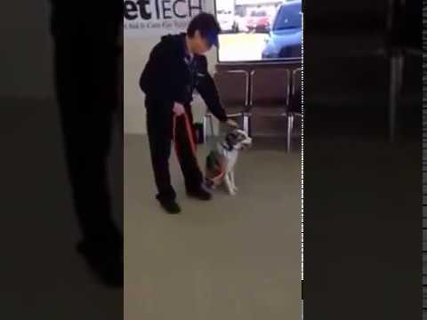 Dog Training Killeen Tx