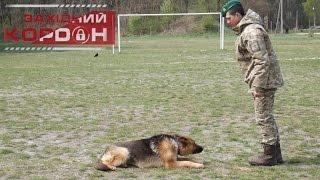 Як навчити собаку команди «ЛЕЖАТИ»? Поради прикордонника-кінолога.