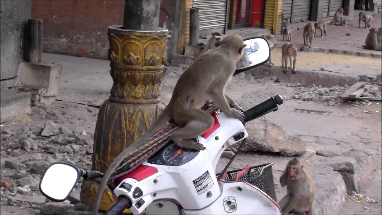 Monkey discovers itself in the mirror.