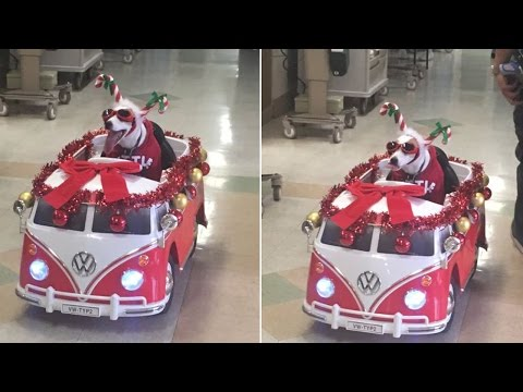 Thumbnail: Therapy Dog Wearing Christmas Costume Delivers Smiles In Motorized Volkswagen