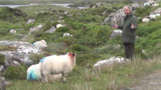 Balade irlandaise pour Pierre Perret
