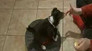 Pup Training 6  Weeks