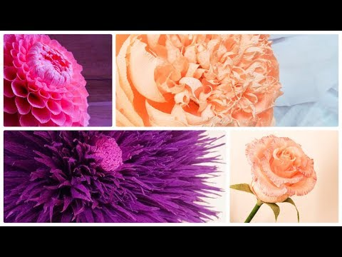 5 diy flowers ideas. Paper flowers. Crepe paper peony. Crepe paper flowers.  wedding decoration