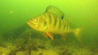 Gölkay Gopro Sualtı Görüntüleri