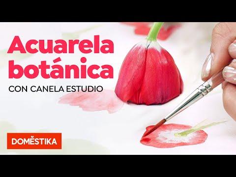 Ilustración Botánica Con Acuarela - Curso Online De Canela Estudio - Domestika