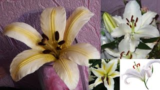Лилия из холодного фарфора \ Lily of cold porcelain(Очень подробный мастер класс по лепке цветка лилии из холодного фарфора. (Master Class