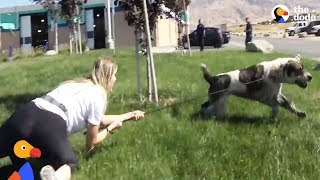 GIANT Dog Drags Rescuer Around Until He Slowly Beings To Trust Them | The Dodo thumbnail
