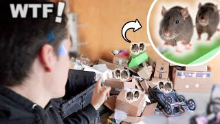 We Found A Family Of Mice In Our Mess! (Caught On Camera)