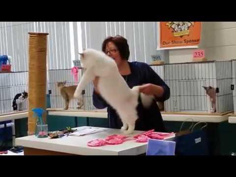 May 17, 2015 Largo Cat Show