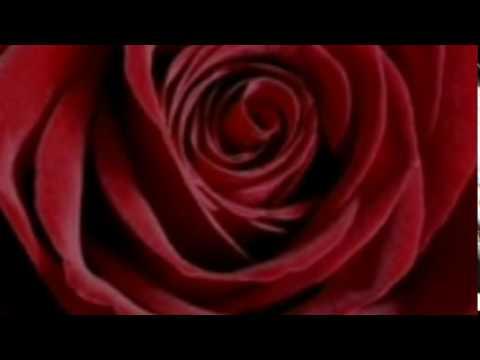 Meine Zeit Mit Dir ♥ Horst Frank (lyrics)