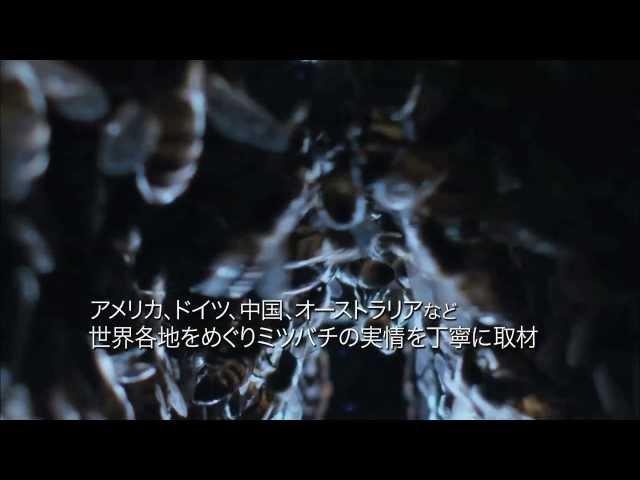 映画『みつばちの大地』予告編